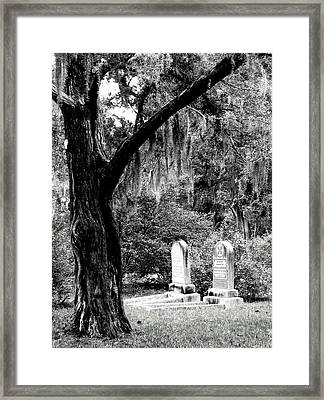 Framed Print featuring the photograph Meet Me At The Old Tree by Lyn Calahorrano