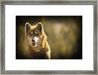 Framed Print featuring the photograph Meet Neon by Sherri Meyer