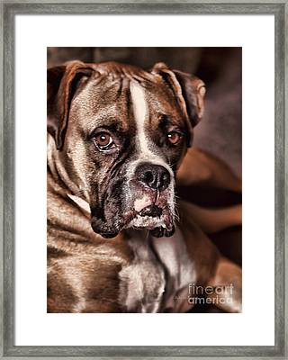 Meet Rocky Framed Print by Deborah Benoit
