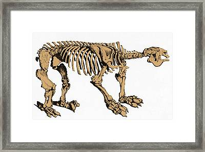 Megatherium, Extinct Ground Sloth Framed Print by Science Source