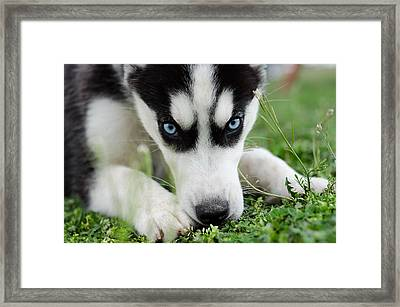 Meko Framed Print by Off The Beaten Path Photography - Andrew Alexander