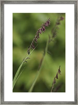 Framed Print featuring the photograph Melica by Trevor Chriss