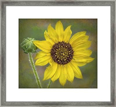 Mellow Yellow Framed Print by Hazel Billingsley