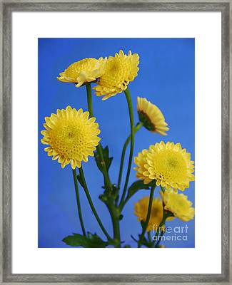 Mellow Yellow Framed Print by Nancie DeMellia