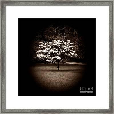 Memoir 1 Framed Print by Luke Moore