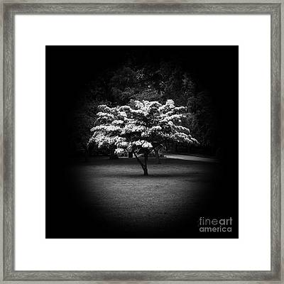 Memoir 2 Framed Print by Luke Moore