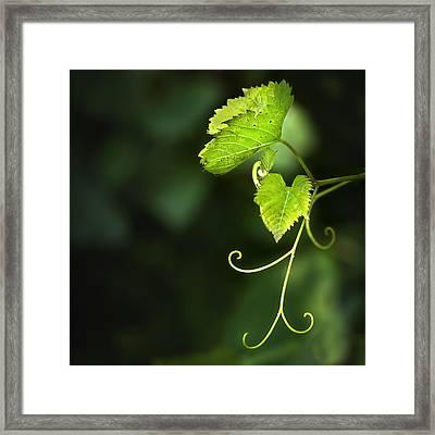 Memories Of Green Framed Print