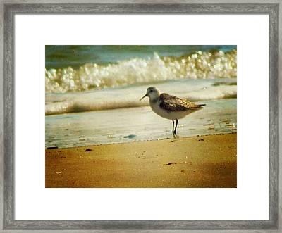 Memories Of Summer Framed Print by Amy Tyler