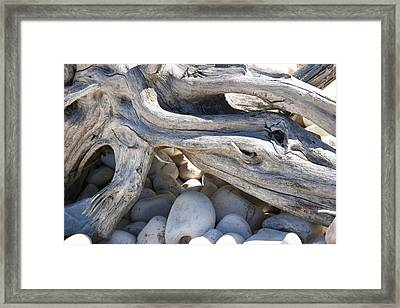Memory Of Whales Framed Print by Carl Bell