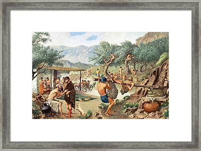 Men Harvest Olives And Press Framed Print