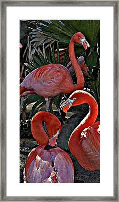 Framed Print featuring the photograph Menage A Trois by Cheri Randolph