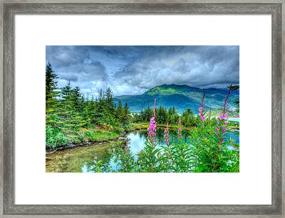 Mendenhall Fireweed Framed Print by Don Mennig