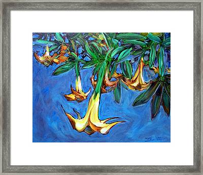 Mendocino Angel Trumpet Framed Print by Sheila Tajima