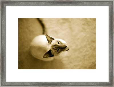 Framed Print featuring the photograph Meow by Lenny Carter