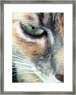 Meow Meow Framed Print by Tia Anderson-Esguerra