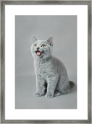 Meow Framed Print by Waldek Dabrowski