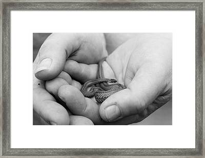Merciful Framed Print by Christopher McPhail
