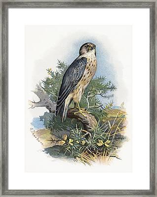 Merlin, Historical Artwork Framed Print