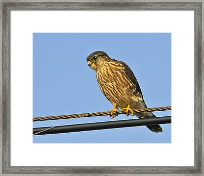 Merlin Framed Print by Tony Beck