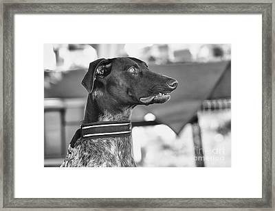 Framed Print featuring the photograph Mesmerized by Eunice Gibb