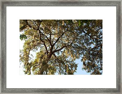 Mesmerizing Framed Print by Aimee L Maher Photography and Art Visit ALMGallerydotcom