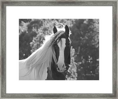 Mesmerizing Eyes Framed Print by Terry Kirkland Cook