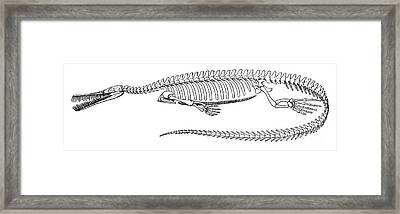 Mesosaurus Brasiliensis Framed Print by Science Source