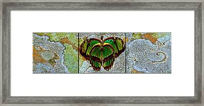 Metamorphic Muse Framed Print by Fine Art  Photography