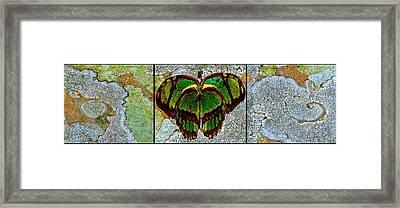 Metamorphic Muse Framed Print