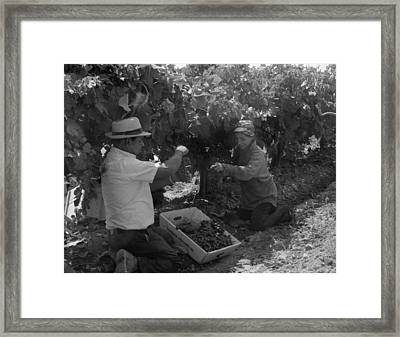 Mexican American Migrant Laborers Framed Print