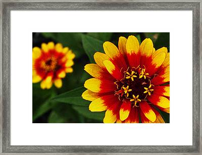 Mexican Fire Framed Print by Frank Blakely