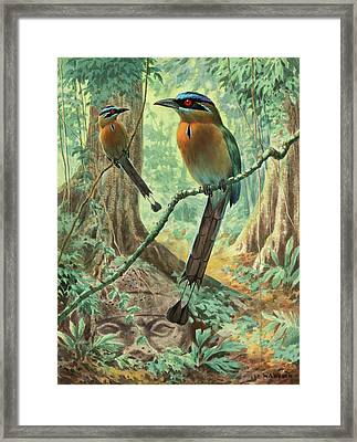 Mexican Motmots Are Perched On Jungle Framed Print by Walter A. Weber