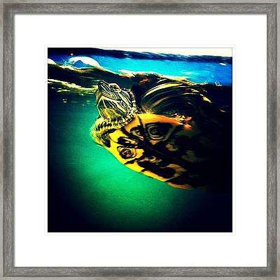 Mexican Turtle Framed Print