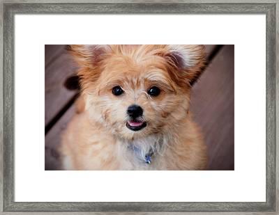 Mi-ki Puppy Framed Print by Angie Tirado