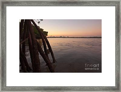 Miami And Mangroves Framed Print by Matt Tilghman