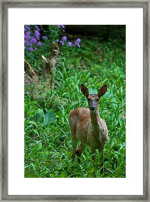 Michigan Whitetail 7344 Framed Print by Michael Peychich