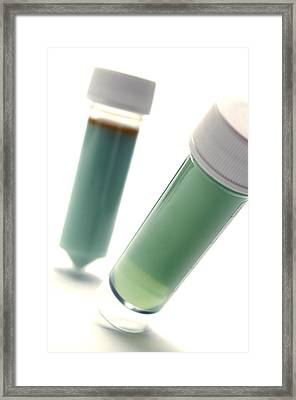 Microbiology Samples Framed Print by Crown Copyrighthealth & Safety Laboratory