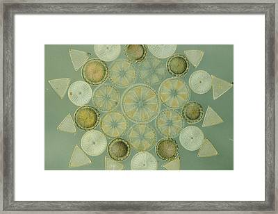 Microscopic Arrangement Framed Print by Darlyne A. Murawski
