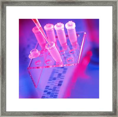 Microtubes, Pipettor (pipette) Tip & Dna Sequence Framed Print by Tek Image