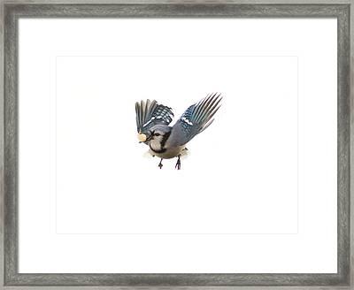Mid Air Framed Print