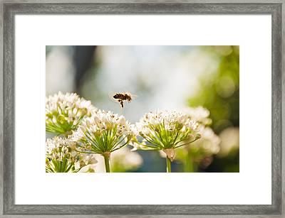 Mid-pollenation Framed Print by Cheryl Baxter
