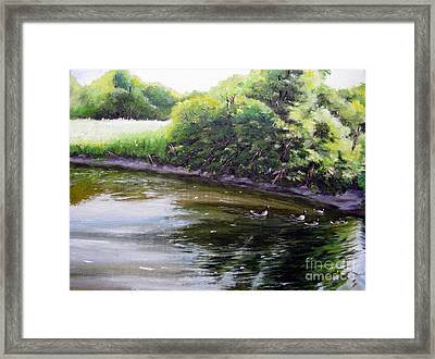Mid Summer Day Canada Geese Framed Print by Ronald Tseng