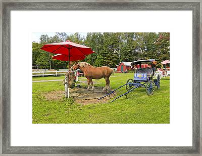 Midday Snack Framed Print by James Steele