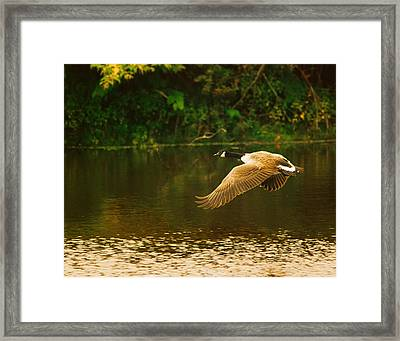 Midmorning Launch Framed Print by Susan Capuano