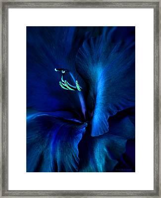 Midnight Blue Gladiola Flower Framed Print by Jennie Marie Schell