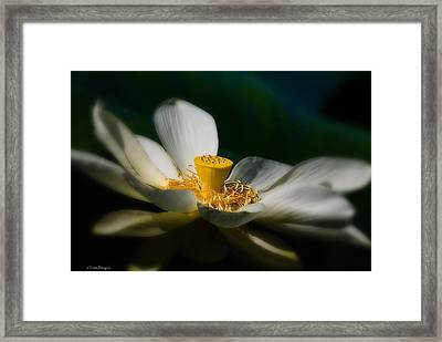 Framed Print featuring the photograph Midnight Blur by Travis Burgess