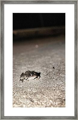 Midnight Frog Framed Print