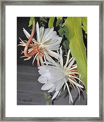 Framed Print featuring the photograph Midnight In The Garden by Cheri Randolph