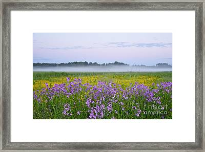 Midnight Light With Flowers Framed Print by Conny Sjostrom