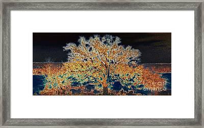 Midnight Moonshine Framed Print by David Carter